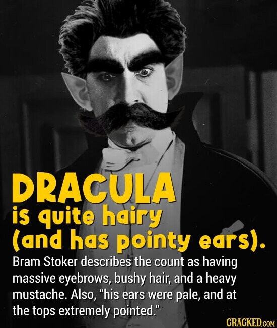 DRACULA is quite hairy (and has Pointy ears). Bram Stoker describes the count as having massive eyebrows, bushy hair, and a heavy mustache. Also, his ears were pale, and at the tops extremely pointed.