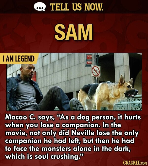 TELL US NOW. SAM I AM LEGEND ANYT Macao C. says, As a dog person, it hurts when you lose a companion. In the movie, not only did Neville lose the only companion he had left, but then he had to face the monsters alone in the dark, which is