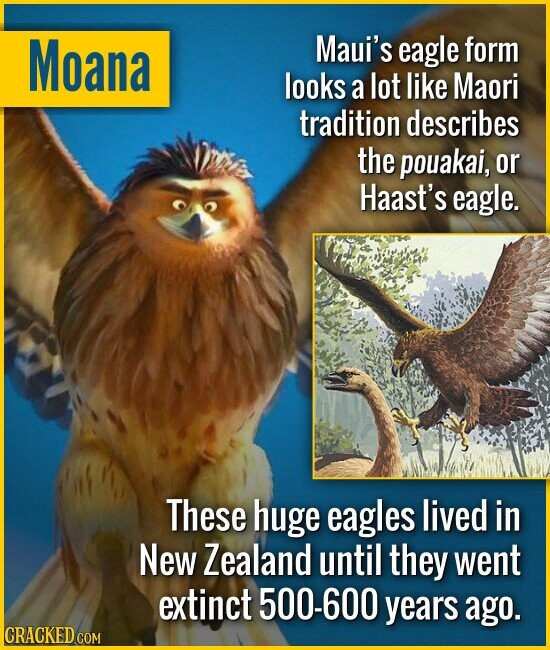 Moana Maui's eagle form looks a lot like Maori tradition describes the pouakai, or Haast's eagle. These huge eagles lived in New Zealand until they we