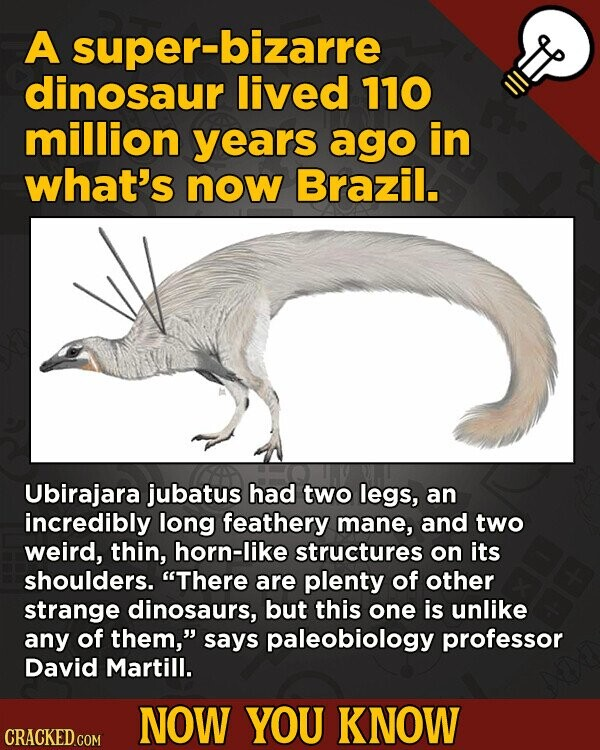 A super-bizarre dinosaur lived 110 million years ago in what's now Brazil. Ubirajara jubatus had two legs, an incredibly long feathery mane, and two w