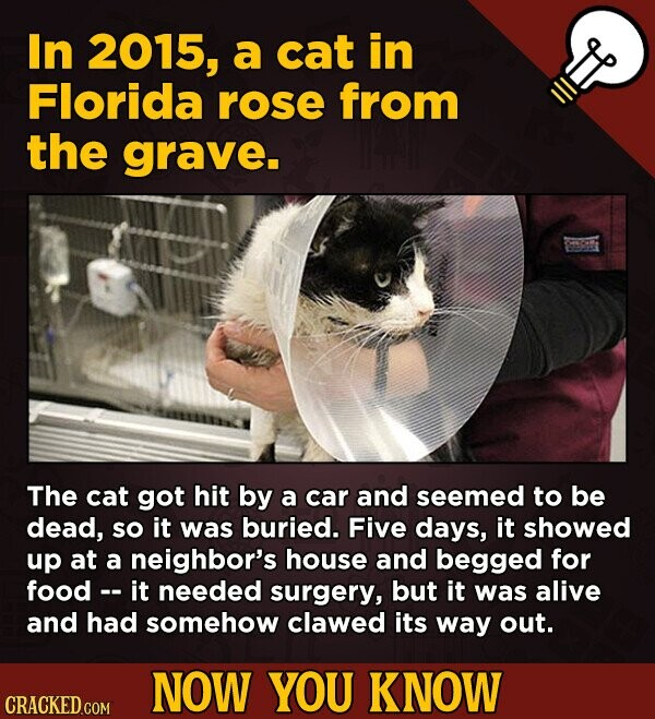 In 2015, a cat in Florida rose from the grave. The cat got hit by a car and seemed to be dead, so it was buried. Five days, it showed up at a neighbor