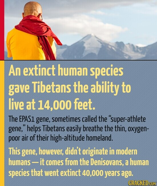 An extinct human species gave Tibetans the ability to live at 14, 000 feet. The EPAS1 gene, sometimes called the super-athlete gene, helps Tibetans easily breathe the thin, oxygen- poor air oftheir -altitude homeland. This gene, however, didn't originate in modern humans - it comes from the Denisovans, a human species