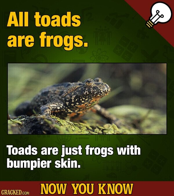 All toads are frogs. Toads are just frogs with bumpier skin. NOW YOU KNOW CRACKED GOM