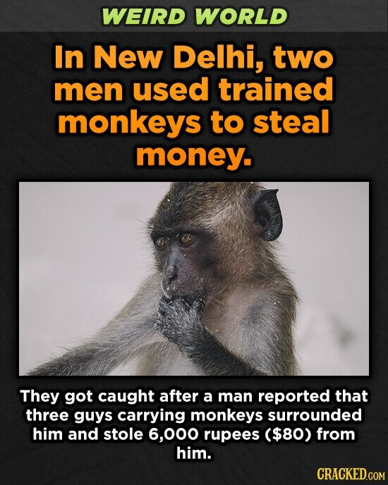 WEIRD WORLD In New Delhi, two men used trained monkeys to steal money. They got caught after a man reported that three guys carrying monkeys surrounded him and stole 6,000 rupees ($80) from him.