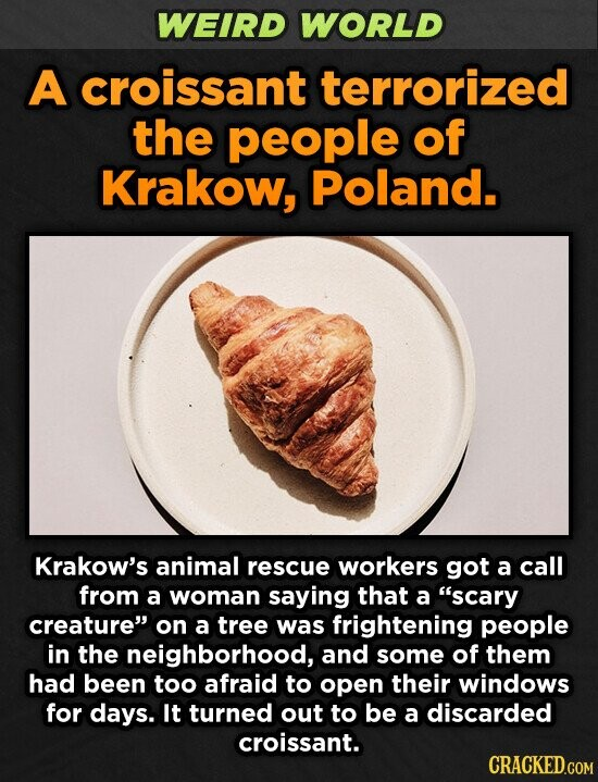 WEIRD WORLD A croissant terrorized the people of Krakow, Poland. Krakow's animal rescue workers got a call from a woman saying that a scary creature on a tree was frightening people in the neighborhood, and some of them had been too afraid to open their windows for days. It turned
