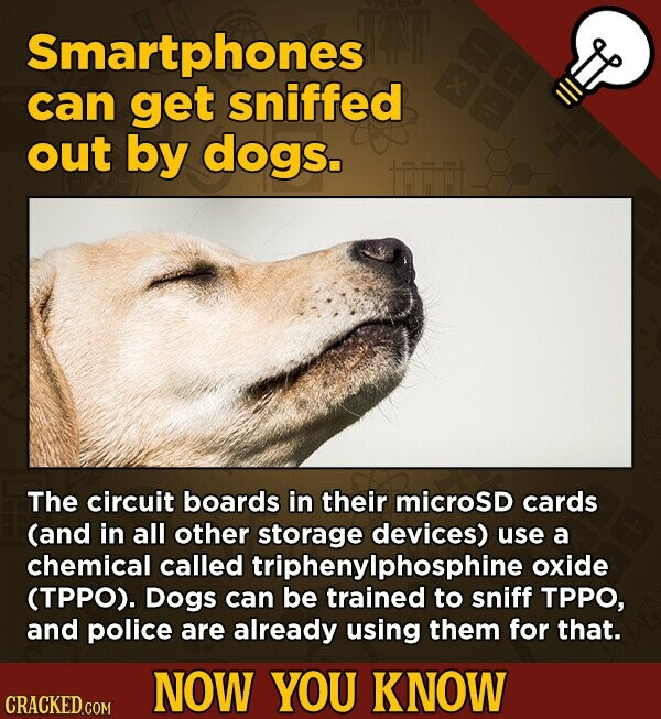 Smartphones can get sniffed out by dogs. The circuit boards in their microsd cards (and in all other storage devices) use a chemical called triphenylphosphine oxide (TPPO). Dogs can be trained to sniff TPPO, and police are already using them for that. NOW YOU KNOW
