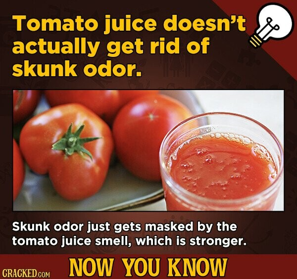 Tomato juice doesn't actually get rid of skunk odor. Skunk odor just gets masked by the tomato juice smell, which is stronger. NOW YOU KNOW CRACKED CO