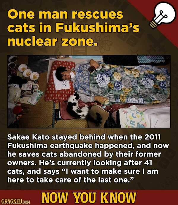 One man rescues cats in Fukushima's nuclear zone. * XX53 3x Sakae Kato stayed behind when the 2011 Fukushima earthquake happened, and now he saves cats abandoned by their former owners. He's currently looking after 41 cats, and says I want to make sure I am here to take