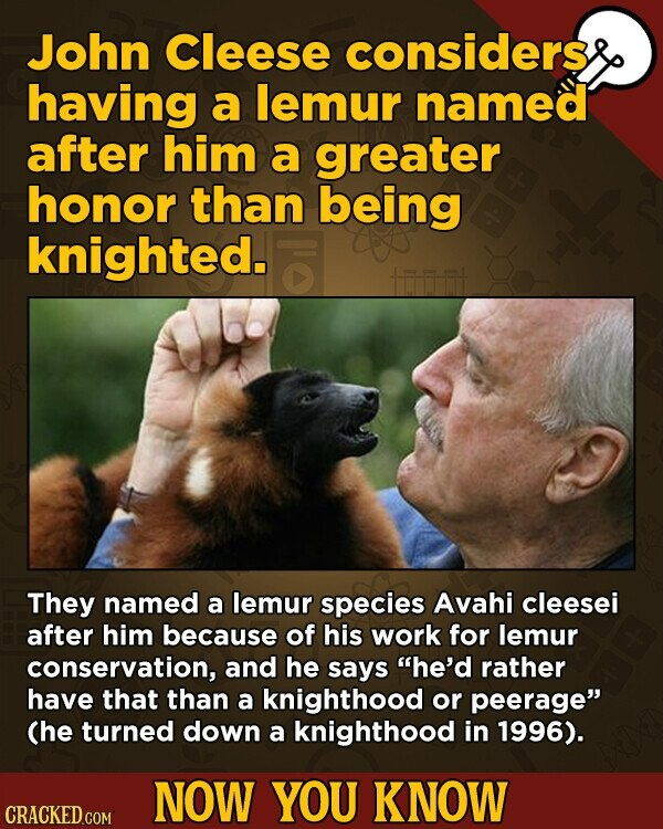 John Cleese considers having a lemur named after him a greater honor than being knighted. They named a lemur species Avahi cleesei after him because of his work for lemur conservation, and he says he'd rather have that than a knighthood or peerage (he turned down a knighthood in 1996).