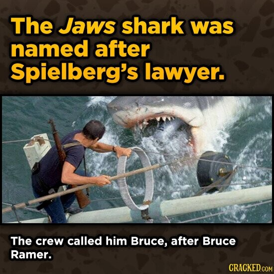 The Jaws shark was named after Spielberg's lawyer. The crew called him Bruce, after Bruce Ramer. CRACKED.COM