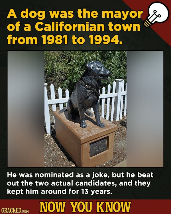 A dog was the mayor of a Californian town from 1981 to 1994. He was nominated as a joke, but he beat out the two actual candidates, and they kept him
