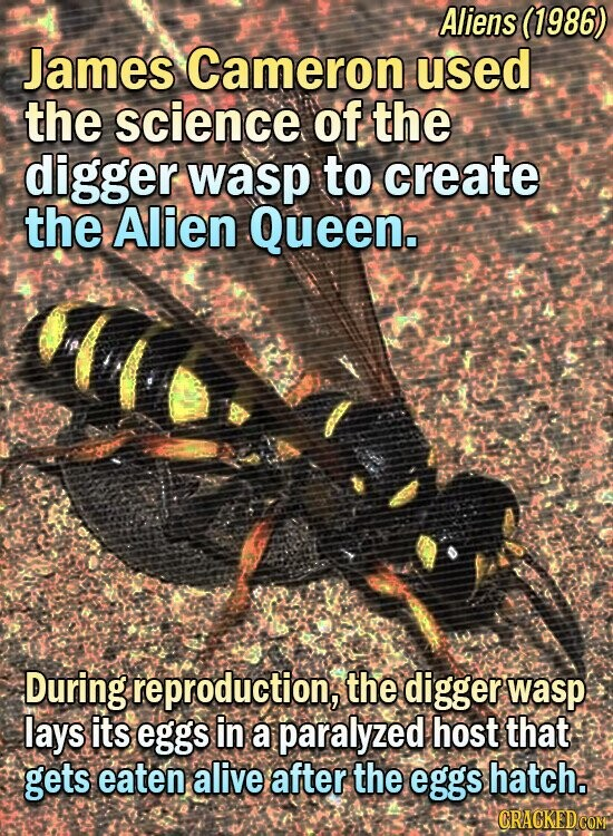 Aliens (1986) James Cameron used the science of the digger wasp to create the Alien Queen. During reproduction, the digger wasp: lays its eggs in a paralyzed host that gets eaten alive after the eggs hatch.