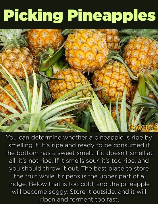 Picking Pineapples CRACKED You can determine whether a pineapple is ripe by smelling it. It's ripe and ready to be consumed if the bottom has a sweet smell. If it doesn't smell at all, it's not ripe. If it smells sour, it's too ripe, and you should throw it out.