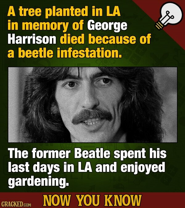A tree planted in LA in memory of George Harrison died because of a beetle infestation. The former Beatle spent his last days in LA and enjoyed garden