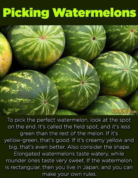 Picking Watermelons CRACKED C To pick the perfect watermelon, look at the spot on the end. It's called the field spot, and it's less green than the rest of the melon. If it's yellow-green, that's good. If it's creamy yellow and big, that's even better. Also consider the shape. Elongated watermelons