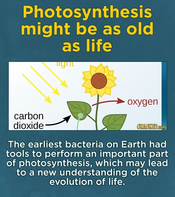 Photosynthesis might be as old as life lyt oxygen carbon dioxide CRACKEDOOM The earliest bacteria on Earth had tools to perform an important part of photosynthesis, which may lead to a new understanding of the evolution of life.