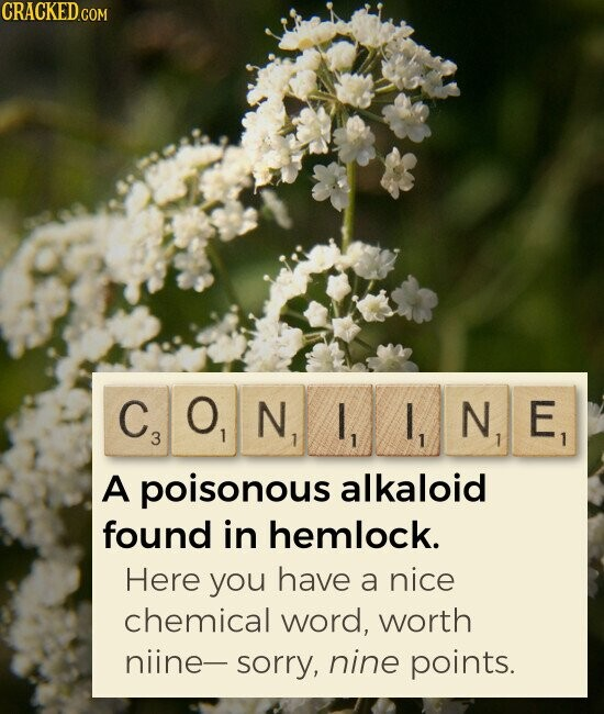 CONIINE A poisonous alkaloid found in hemlock. Here you have a nice chemical word, worth niine- sorry, nine points.