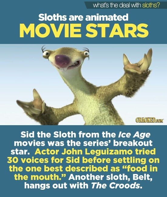 what's the deal with sloths? Sloths are animated MOVIE STARS CRAGKEDOOM Sid the Sloth from the Ice Age movies was the series' breakout star. Actor John Leguizamo tried 30 VOiCES for Sid before settling on the one best described as food in the mouth. Another sloth, Belt, hangs out with
