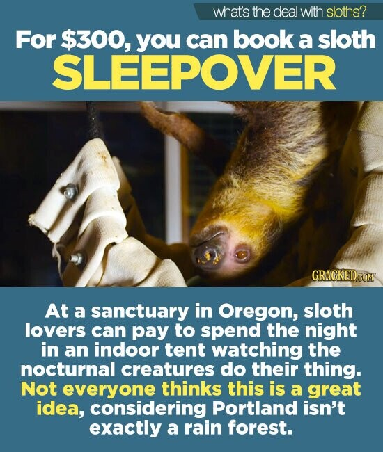 what's the deal with sloths? For $300, you can book a sloth SLEEPOVER At a sanctuary in Oregon, sloth lovers can pay to spend the night in an indoor tent watching the nocturnal creatures do their thing. Not everyone thinks this is a great idea, considering Portland isn't exactly