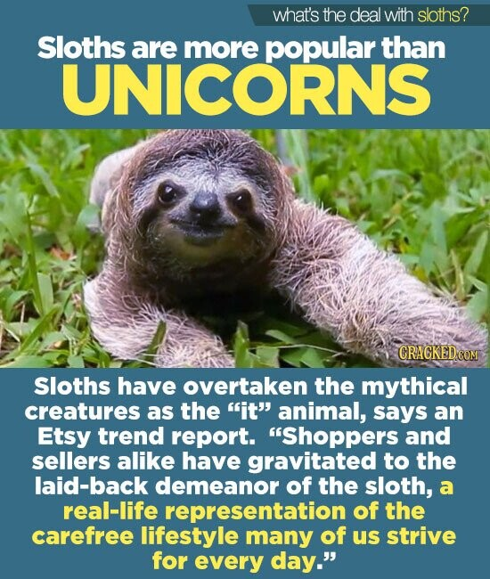 what's the deal with sloths? Sloths are more popular than UNICORNS Sloths have overtaken the mythical creatures as the it animal, says an Etsy trend report. Shoppers and sellers alike have gravitated to the laid-back demeanor of the sloth, a real-life representation of the carefree lifestyle many of us