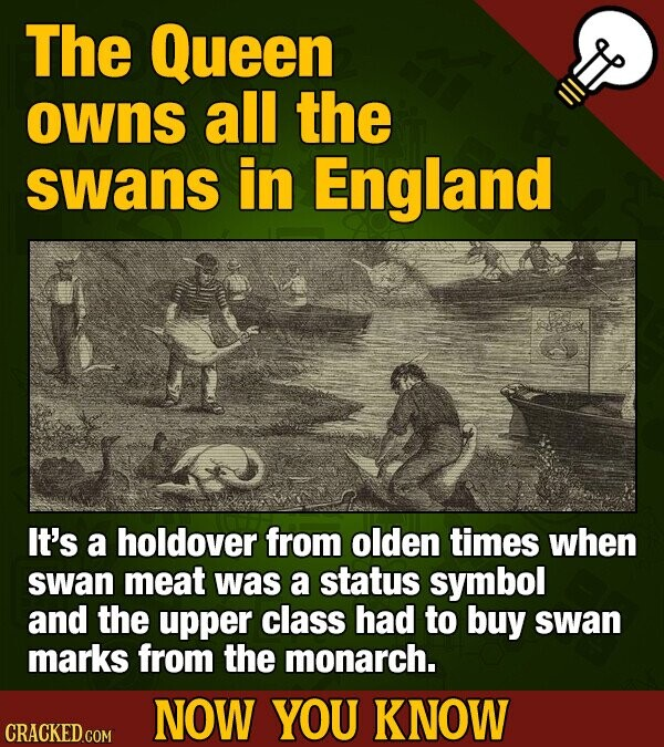 The Queen owns all the swans in England It's a holdover from olden times when swan meat was a status symbol and the upper class had to buy swan marks from the monarch. NOW YOU KNOW CRACKED COM