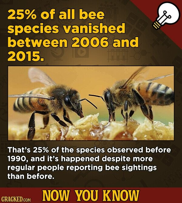 25% of all bee species vanished between 2006 and 2015. F That's 25% of the species observed before 1990, and it's happened despite more regular people reporting bee sightings than before. NOW YOU KNOW