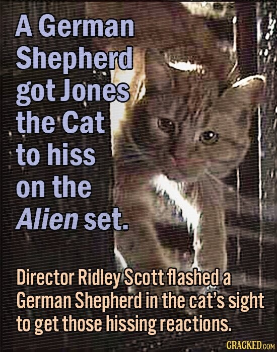 A German Shepherd got Jones the Cat to hiss on the Alien set. Director Ridley Scott flashed a German Shepherd in the cat's sight to get those hissing reactions. CRACKED COM