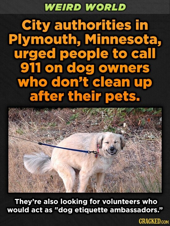 WEIRD WORLD City authorities in Plymouth, Minnesota, urged people to call 911 on dog owners who don't clean up after their pets. They're also looking for volunteers who would act as dog etiquette ambassadors. CRACKED.COM