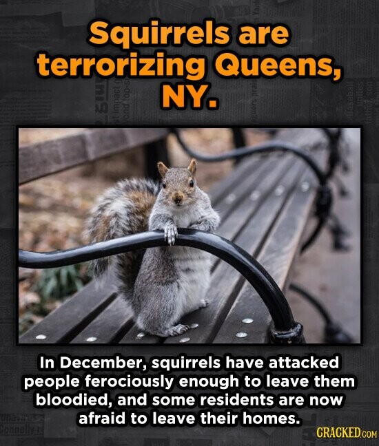 Squirrels are terrorizing Queens, NY. In December, squirrels have attacked people ferociously enough to leave them bloodied, and some residents are no
