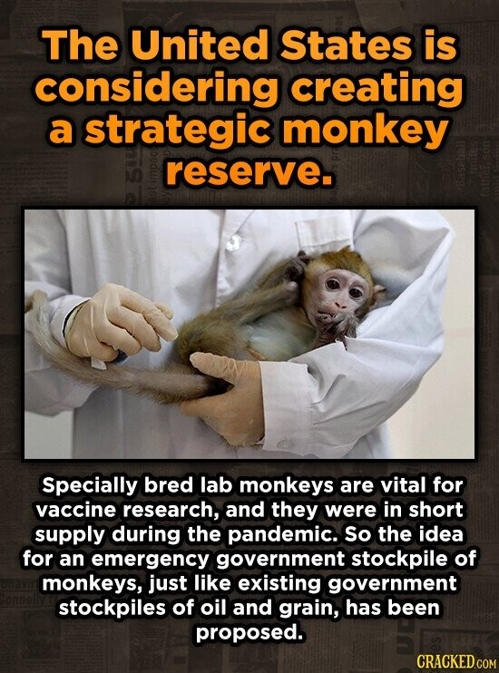 The United States is considering creating a strategic monkey reserve. 1O Specially bred lab monkeys are vital for vaccine research, and they were in short supply during the pandemic. So the idea for an emergency government stockpile of monkeys, just like existing government stockpiles of oil and grain, has been