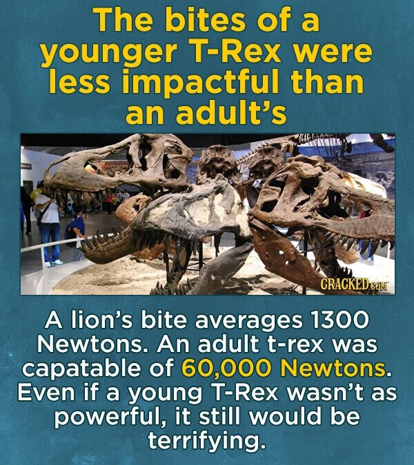 The bites of a younger T-Rex were less impactful than an adult's A lion's bite averages 1300 Newtons. An adult t-rex was capatable of ,000 Newtons. Even if a young T-Rex wasn't as powerful, it still would be terrifying.
