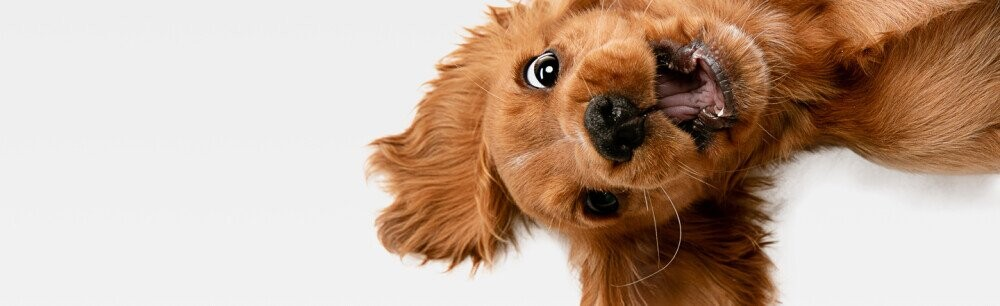 13 Facts That Prove How Good Dogs Are (As If You Needed Proof)
