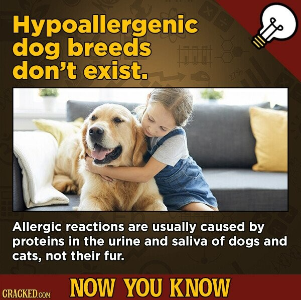 Hypoallergenic dog breeds Fi don't exist. 27% Allergic reactions are usually caused by proteins in the urine and saliva of dogs and cats, not their fur. NOW YOU KNOW