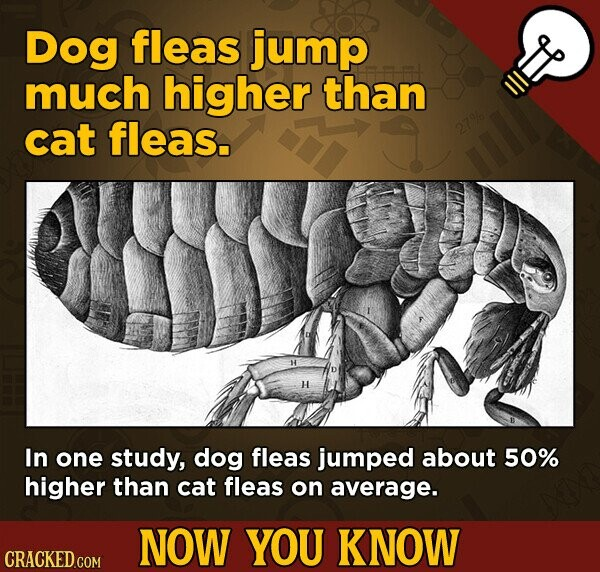 Dog fleas jump much higher than cat fleas. 27% In one study, dog fleas jumped about 50% higher than cat fleas on average. NOW YOU KNOW