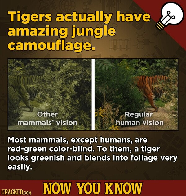 Tigers actually have amazing jungle camouflage. Other Regular mammals't vision human vision Most mammals, except humans, are red-green color-blind. To them, a tiger looks greenish and blends into foliage very easily. NOW YOU KNOW CRACKED.COM