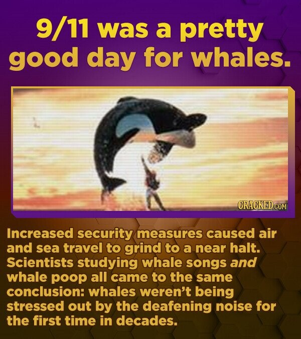9/11 was a pretty good day for whales. CRACKED.COM Increased security measures caused air and sea travel to grind to a near halt. Scientists studying whale songs and whale poop all came to the same conclusion: whales weren't being stressed out by the deafening noise for the first time in decades.