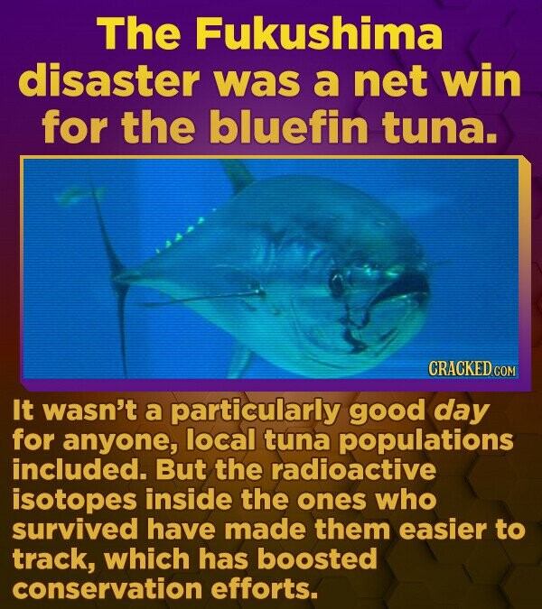 The Fukushima disaster was a net win for the bluefin tuna. CRACKED.COM It wasn't a particularly good day for anyone, local tuna populations included. But the radioactive isotopes inside the ones who survived have made them easier to track, which has boosted conservation efforts.