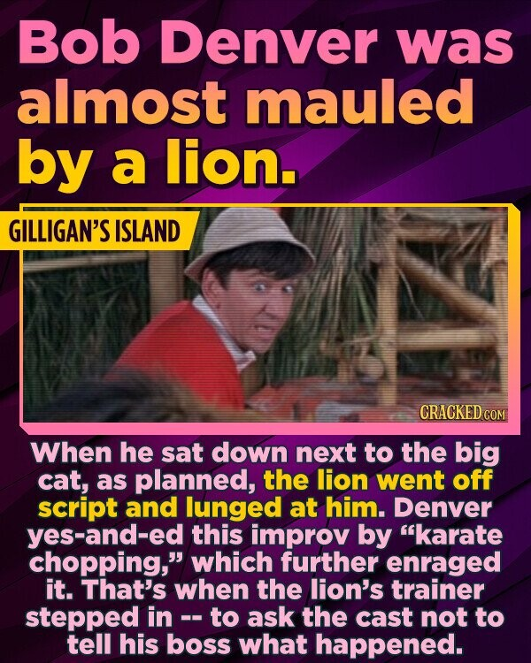 Bob Denver was almost mauled by a lion. GILLIGAN'S ISLAND CRACKED COM When he sat down next to the big cat, as planned, the lion went off script and lunged at him. Denver yes-and-ed this improv by karate chopping, which further enraged it. That's when the lion's trainer stepped in to