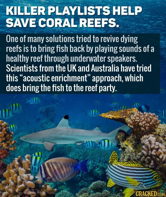 KILLER PLAYLISTS HELP SAVE CORAL REEFS. One of many solutions tried to revive dying reefs is to bring fish back by playing sounds of a healthy reef through underwater speakers. Scientists from the UK and Australia have tried this acoustic enrichment approach, which does bring the fish to the reef