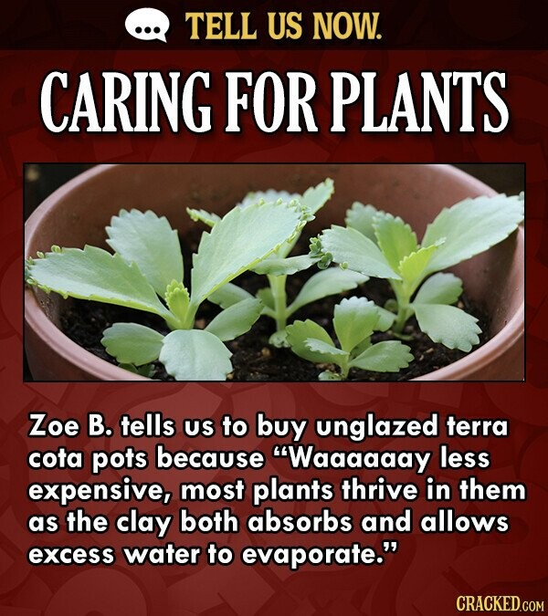 TELL US NOW. CARING FOR PLANTS Zoe B. tells US to buy unglazed terra cota pots because Waaaaaay less expensive, most plants thrive in them as the cla