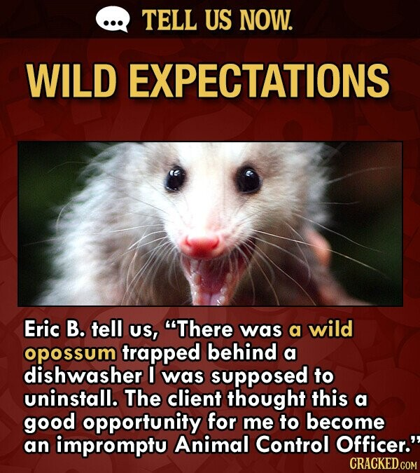 TELL US NOW. WILD EXPECTATIONS Eric B. tell Us, There was a wild opossum trapped behind a dishwasher I was supposed to uninstall. The client thought