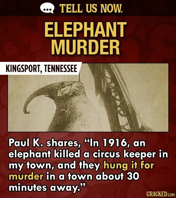 TELL US NOW. ELEPHANT MURDER KINGSPORT, TENNESSEE Paul K. shares, In 1916, an elephant killed a circus keeper in my town, and they hung it for murder in a town about 30 minutes away.
