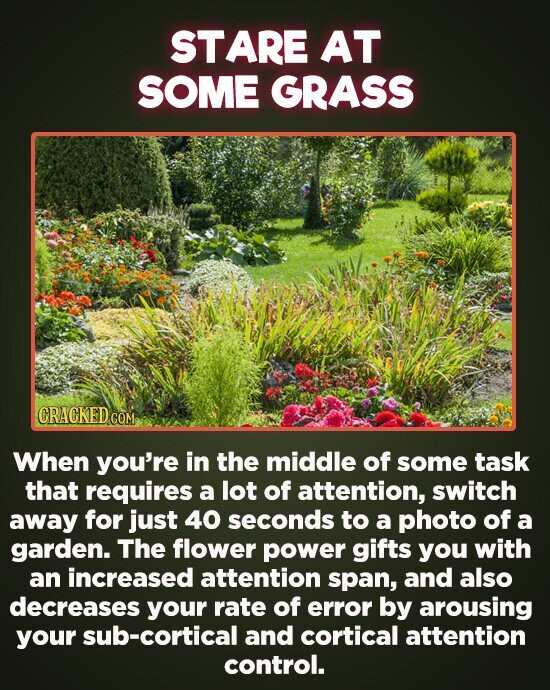 STARE AT SOME GRASS CRACKED COM When you're in the middle of some task that requires a lot of attention, switch away for just 40 seconds to a photo of a garden. The flower power gifts you with an increased attention span, and also decreases your rate of error by arousing