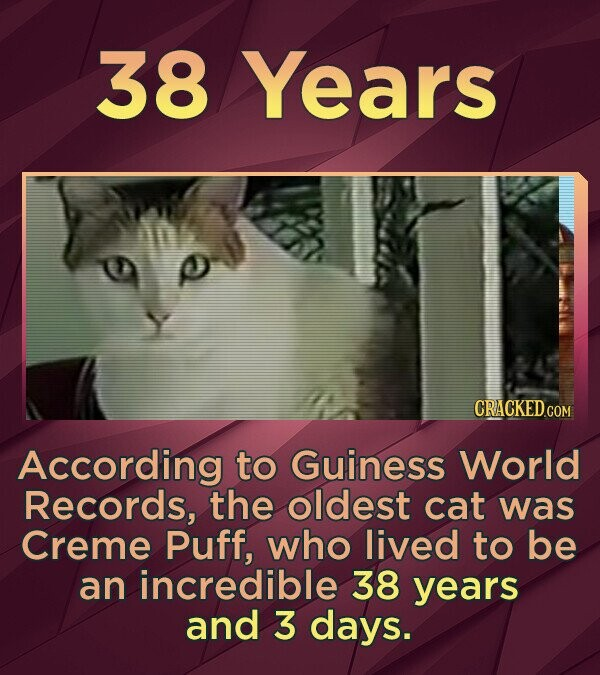 38 Years According to Guiness World Records, the oldest cat was Creme Puff, who lived to be an incredible 38 years and 3 days.