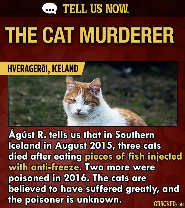 TELL US NOW. THE CAT MURDERER HVERAGEROI, ICELAND Agust R. tells US that in Southern lceland in August 2015, three cats died after eating pieces of fish injected with anti-freeze. Two more were poisoned in 2016. The cats are believed to have suffered greatly, and the poisoner is unknown. CRACKED.COM