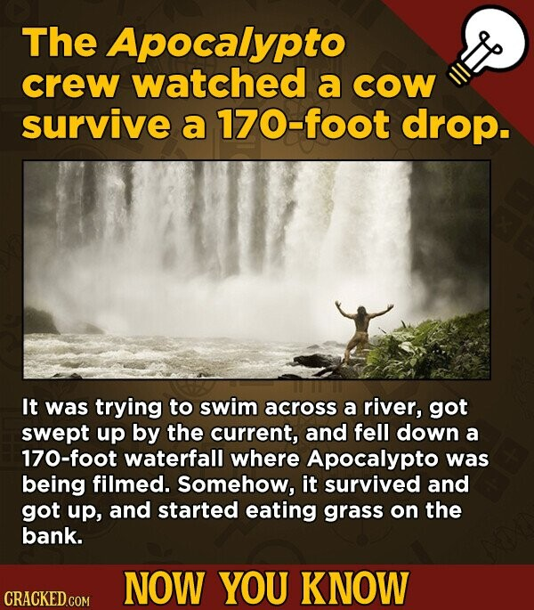 The Apocalypto crew watched a COW survive a 170-foot drop. It was trying to swim across a river, got swept up by the current, and fell down a 170-foot waterfall where Apocalypto was being filmed. Somehow, it survived and got up, and started eating grass on the bank. NOW YOU