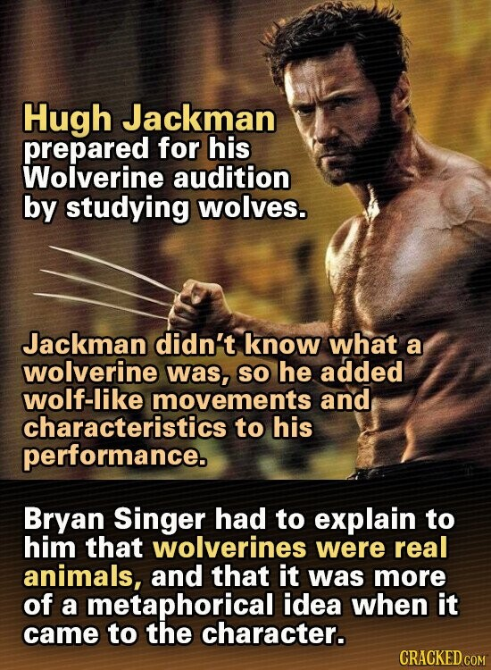Hugh Jackman prepared for his Wolverine audition by studying wolves. Jackman didn't know what a wolverine was, SO he added wolf-like movements and characteristics 1 to his performance. Bryan Singer had to explain to him that wolverines were real animals, and that it was more of a metaphorical idea when it