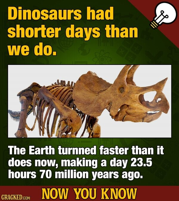 Dinosaurs had shorter days than we do. The Earth turnned faster than it does now, making a day 23.5 hours 70 million years ago. NOW YOU KNOW CRACKED COM
