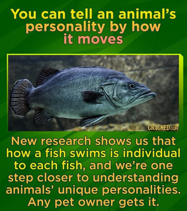 You can tell an animal's personality by how it moves New research shows us that how a fish swims is individual to each fish, and we're one step closer to understanding animals' unique personalities. Any pet owner gets it.