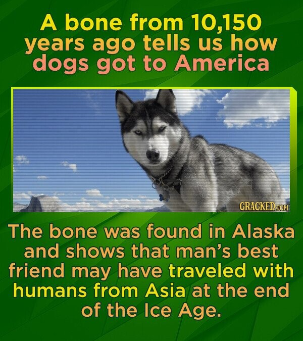 A bone from 10,150 years ago tells us how dogs got to America The bone was found in Alaska and shows that man's best friend may have traveled with humans from Asia at the end of the Ice Age.